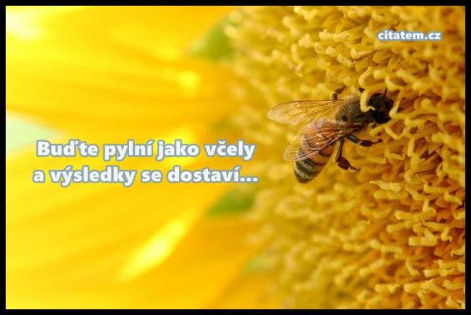Buďte pylní jako včely