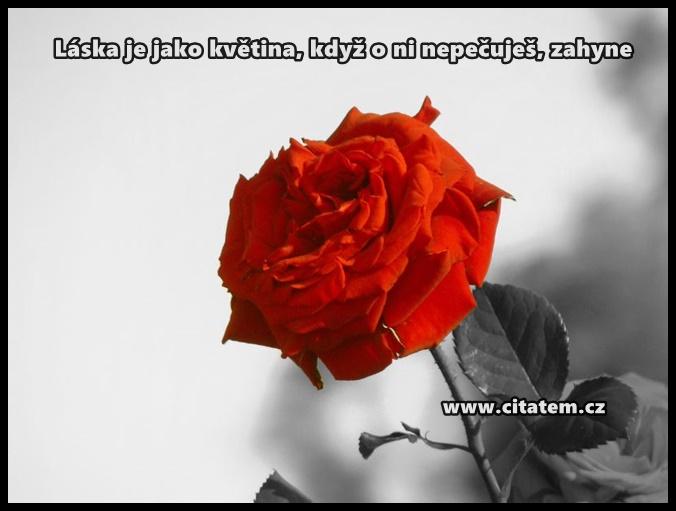 Láska je jako květina
