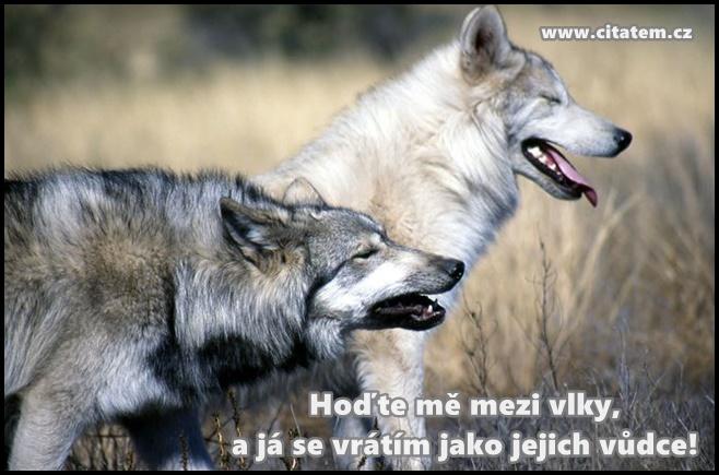Hoďte mě mezi vlky