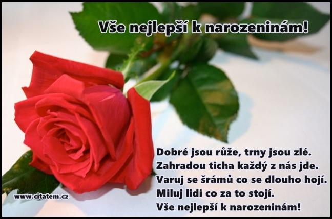 přání k narozeninám citáty Přání k narozeninám: Dobré jsou růže, trny… | Básničky, citáty o lásce přání k narozeninám citáty