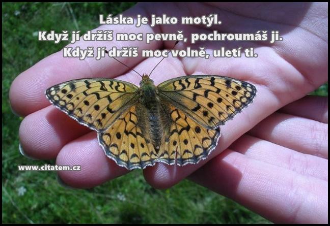 Láska je jako motýl