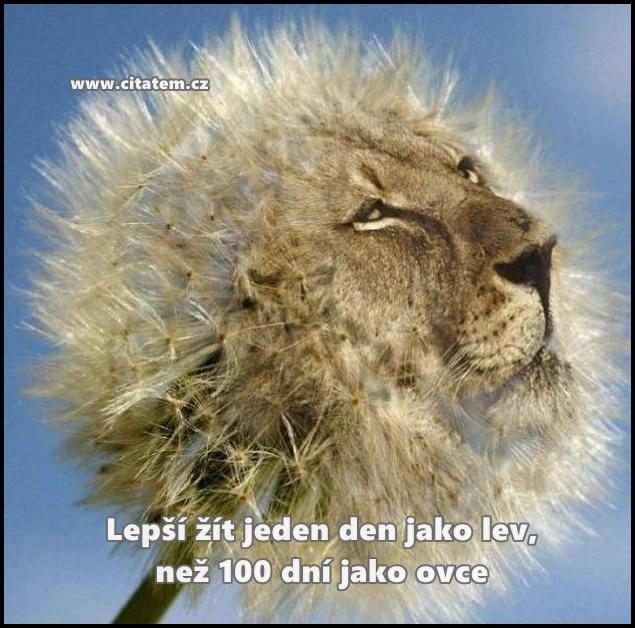 Lepší žít jeden den jako lev