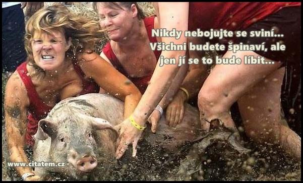 Nikdy nebojujte se sviní...