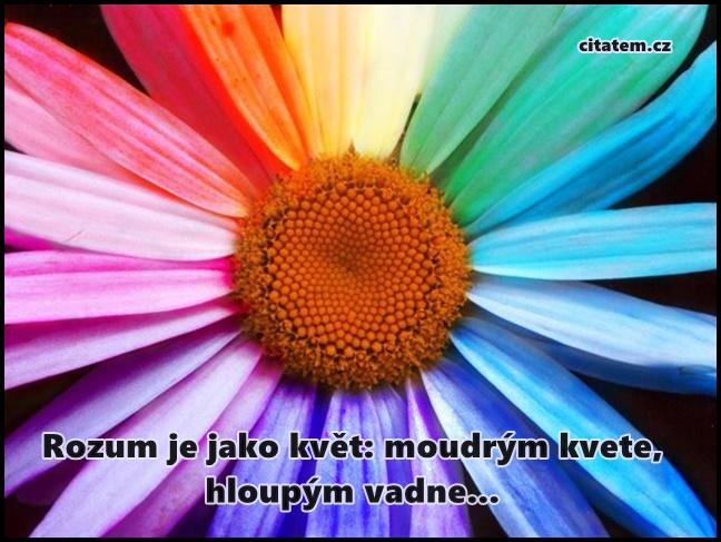 Rozum je jako květ
